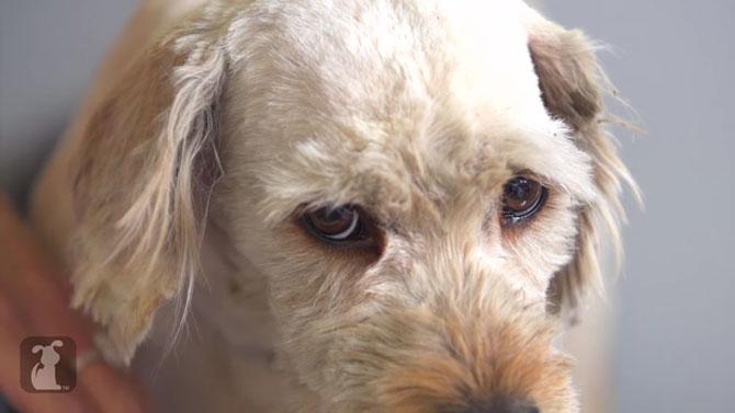 Tunsoarea care a salvat viata catelului Charlie - Poza 6