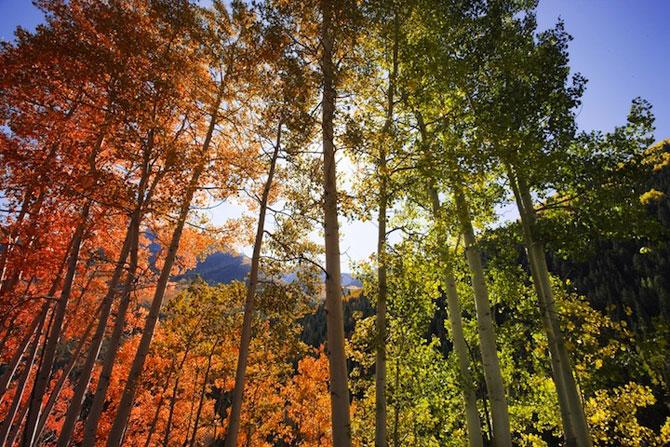 Minunatele culori ale padurilor din Aspen - Poza 1