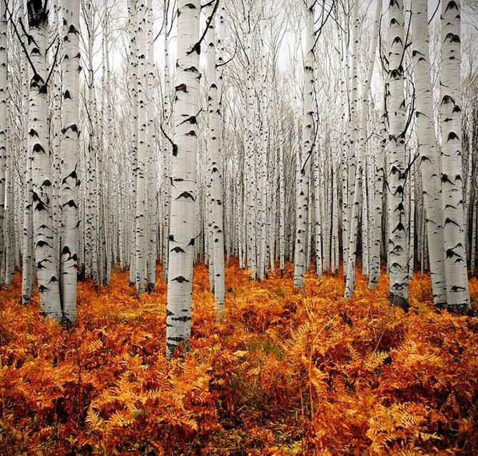Minunatele culori ale padurilor din Aspen - Poza 2