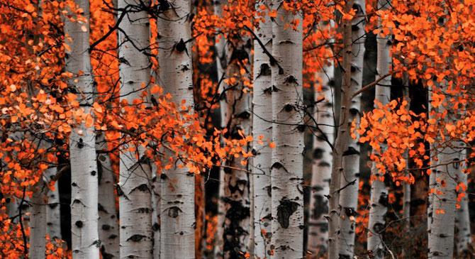 Minunatele culori ale padurilor din Aspen - Poza 3