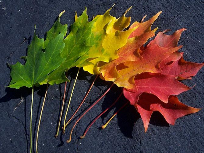 10 curcubee din frunze de toamna - Poza 2