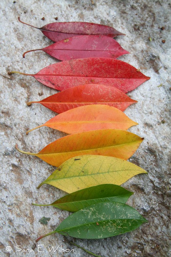 10 curcubee din frunze de toamna - Poza 8