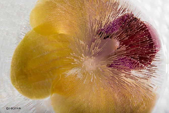 Incredibilele texturi ale florilor inghetate - Poza 3