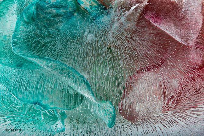Incredibilele texturi ale florilor inghetate - Poza 4