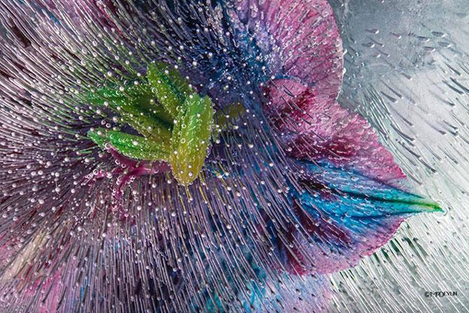 Incredibilele texturi ale florilor inghetate - Poza 6