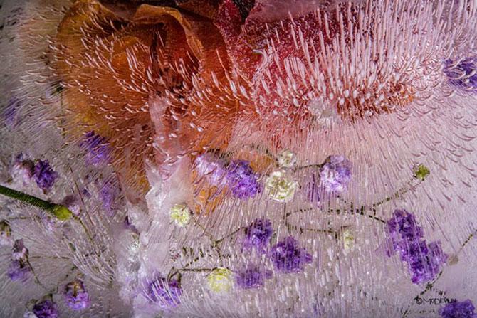 Incredibilele texturi ale florilor inghetate - Poza 7