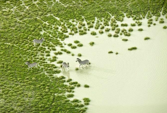 Safari de la inaltime: Animalele din Botswana, de Zack Seckler