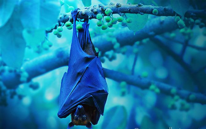 Triluri thailandeze multi-colore - Poza 4