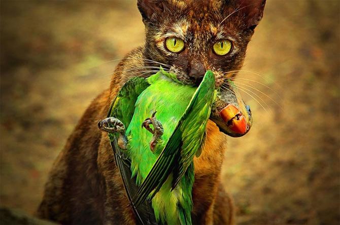 Triluri thailandeze multi-colore - Poza 8