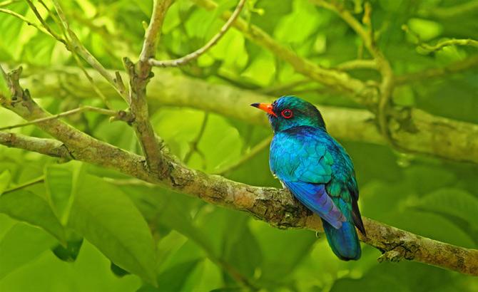 Triluri thailandeze multi-colore - Poza 13