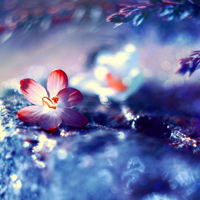 Florile Barbarei: 12 imagini superbe