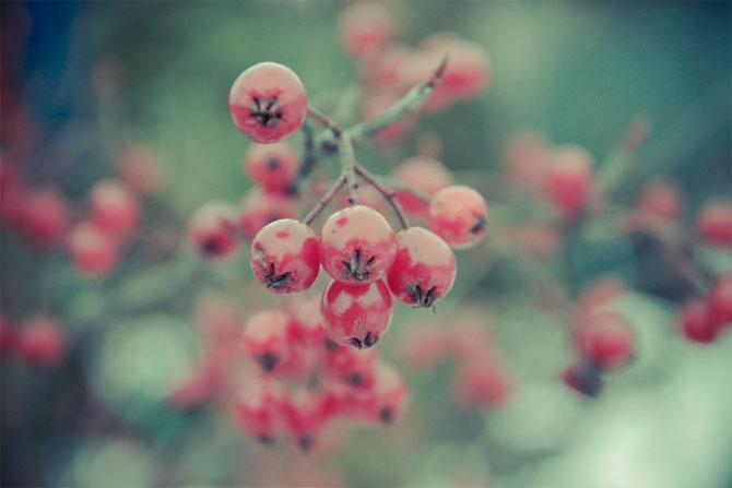 Flori, fructe si feline de Sandra Shore