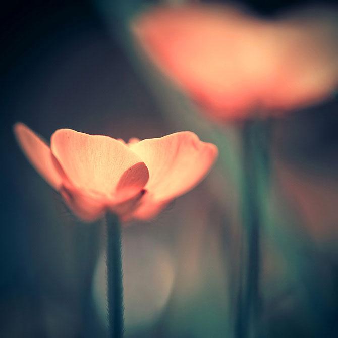 Iwona vorbeste cu florile - Poza 1
