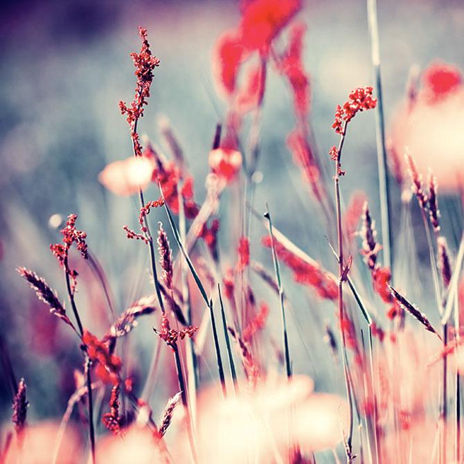 Iwona vorbeste cu florile - Poza 2