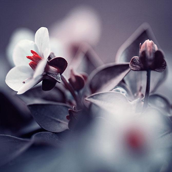 Iwona vorbeste cu florile - Poza 4