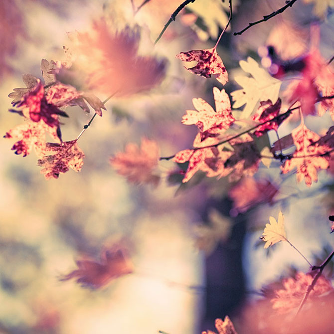 Iwona vorbeste cu florile - Poza 5