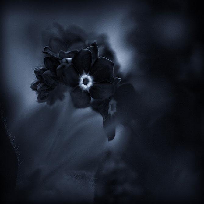 Iwona vorbeste cu florile - Poza 9