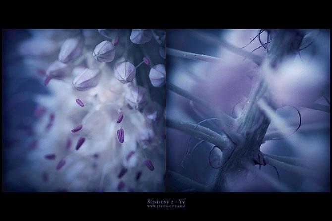 Iwona vorbeste cu florile - Poza 10