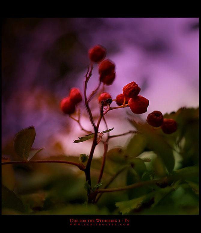 Iwona vorbeste cu florile - Poza 11
