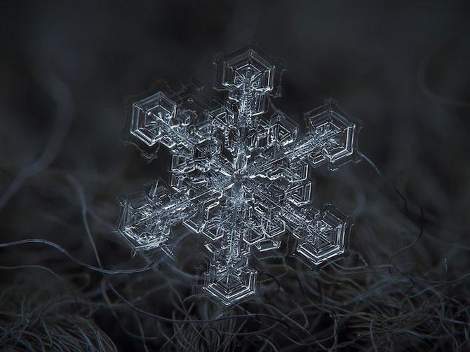 Fulgi la microscop, cu Alexei Kljatov