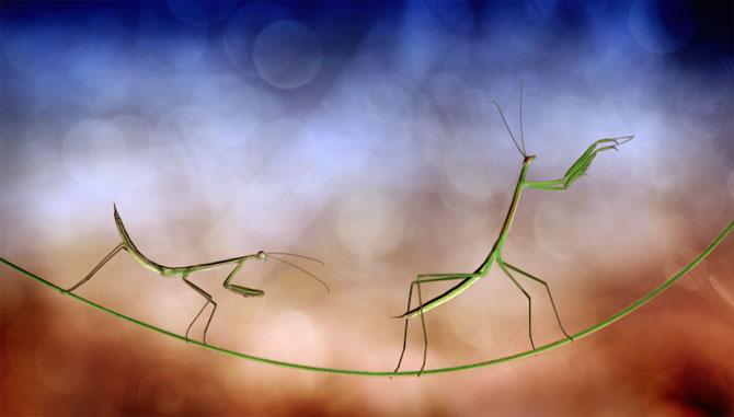 Lumea miraculoasa a insectelor, de Nordin Seruyan - Poza 2