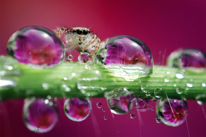 Lumea miraculoasa a insectelor, de Nordin Seruyan - Poza 3