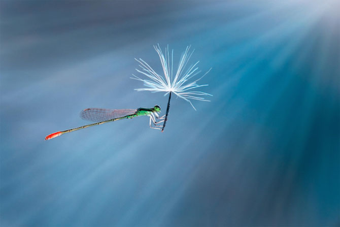Lumea miraculoasa a insectelor, de Nordin Seruyan - Poza 4
