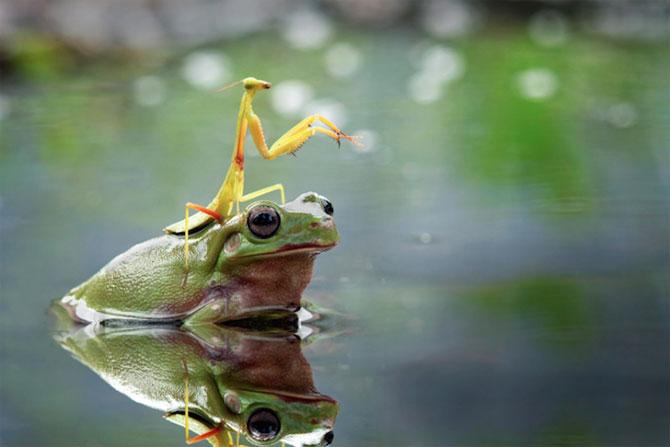 Lumea miraculoasa a insectelor, de Nordin Seruyan - Poza 8