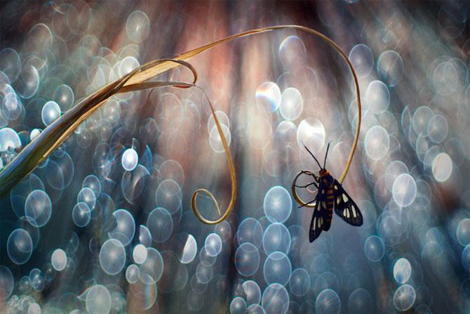 Lumea miraculoasa a insectelor, de Nordin Seruyan - Poza 9