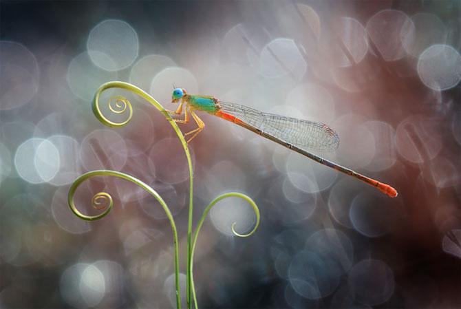 Lumea miraculoasa a insectelor, de Nordin Seruyan - Poza 10