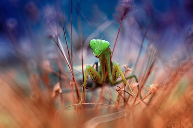 Lumea miraculoasa a insectelor, de Nordin Seruyan - Poza 11