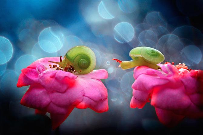 Lumea miraculoasa a insectelor, de Nordin Seruyan - Poza 12