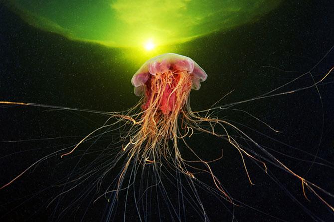 Flori subacvatice - fotografii cu meduze - Poza 7