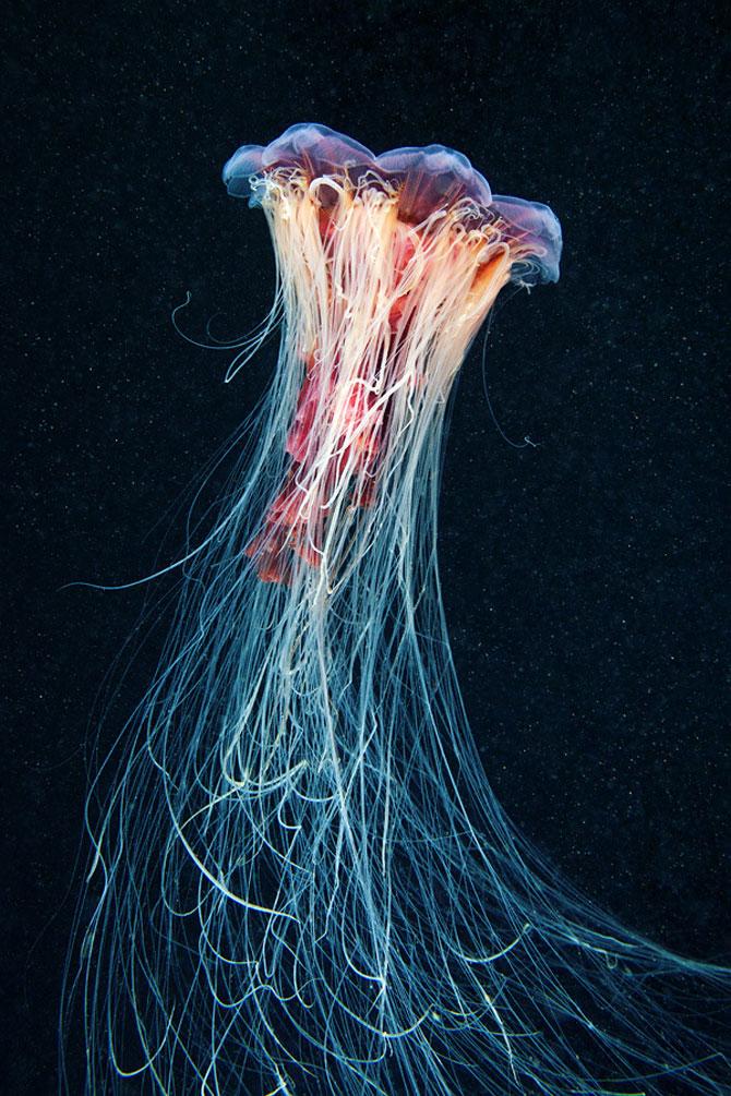 Flori subacvatice - fotografii cu meduze - Poza 8