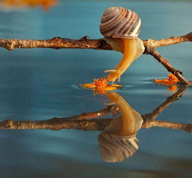 Fotografii din lumea magica a melcilor - Poza 2
