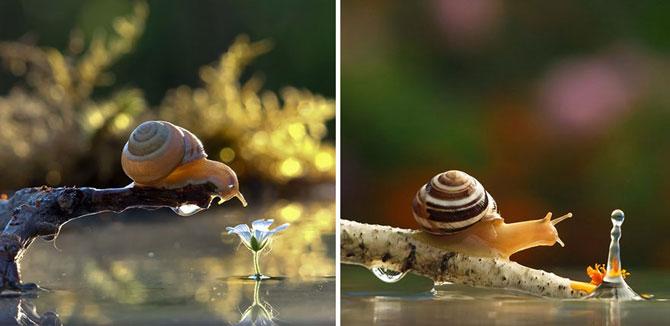 Fotografii din lumea magica a melcilor - Poza 3