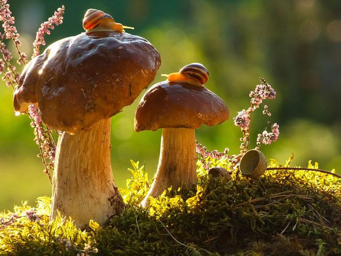 Fotografii din lumea magica a melcilor - Poza 4