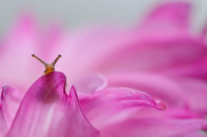 Fotografii din lumea magica a melcilor - Poza 9