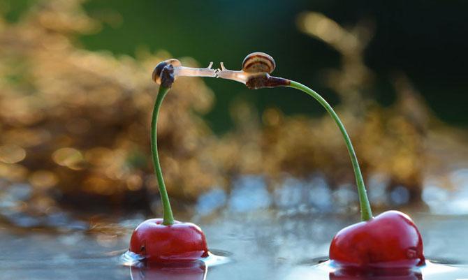 Fotografii din lumea magica a melcilor - Poza 10