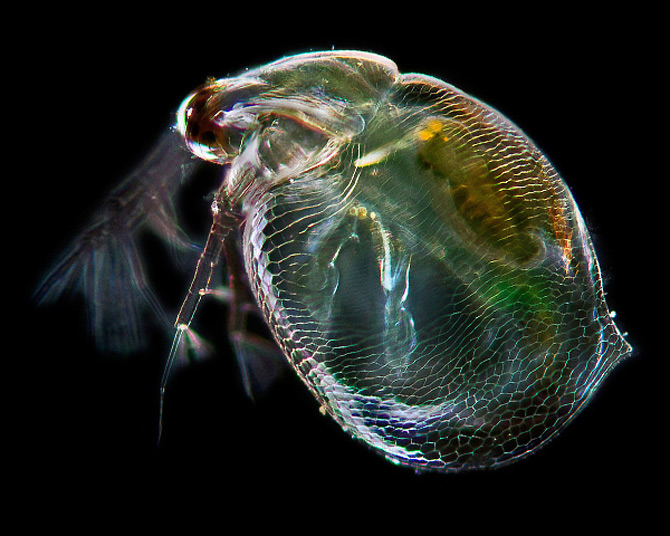 Intre microbiologie si arta – Daniel Stoupin - Poza 3