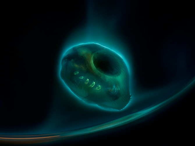 Intre microbiologie si arta – Daniel Stoupin - Poza 10