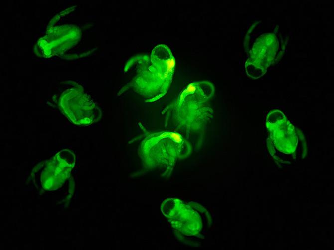 Intre microbiologie si arta – Daniel Stoupin - Poza 11