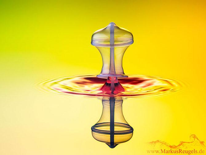 Culorile fascinante ale apei, la microscop - Poza 3