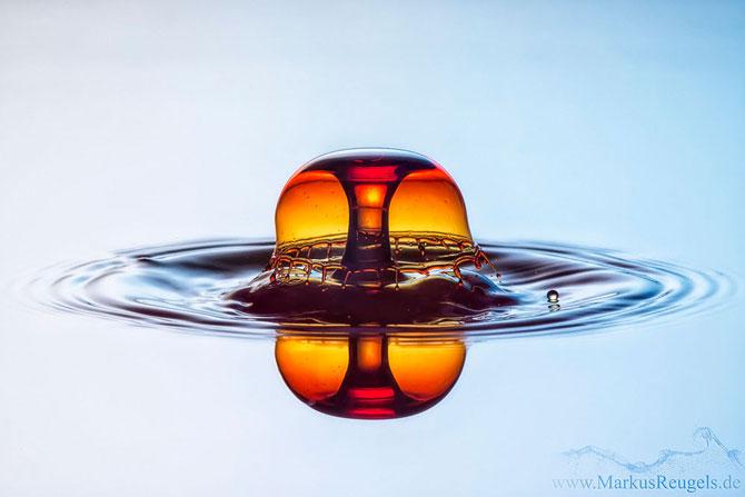 Culorile fascinante ale apei, la microscop - Poza 5