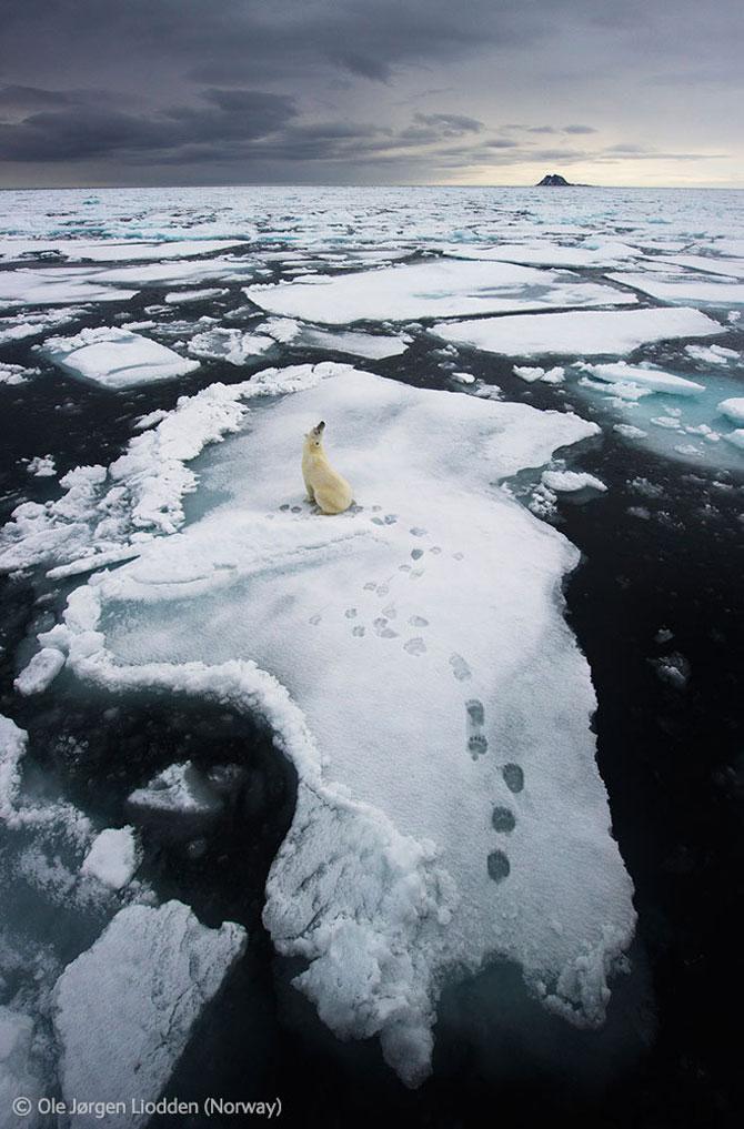 Cele mai frumoase fotografii din natura in 2012