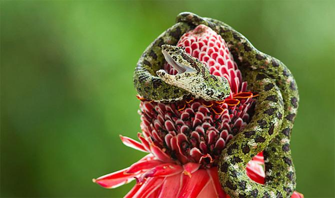 Portretul ca tril de pasare, de Juan Carlos Vindas - Poza 10
