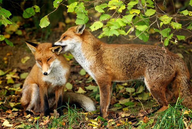 Ce spun animalele despe Mark Bridger - Poza 15