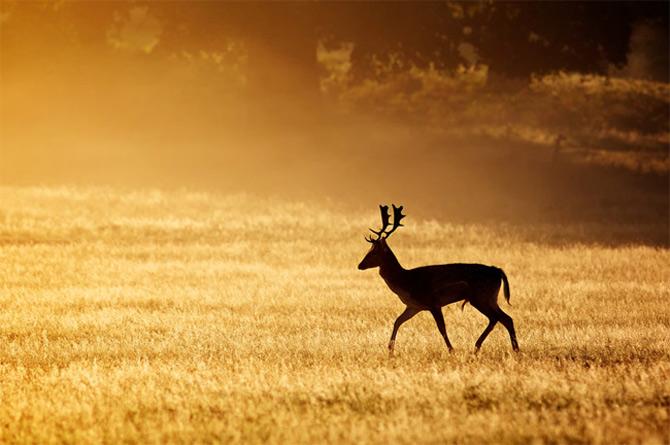 Ce spun animalele despe Mark Bridger - Poza 17