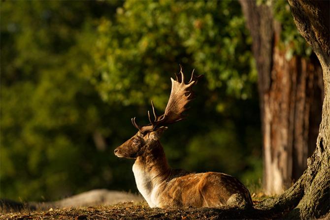 Ce spun animalele despe Mark Bridger - Poza 18