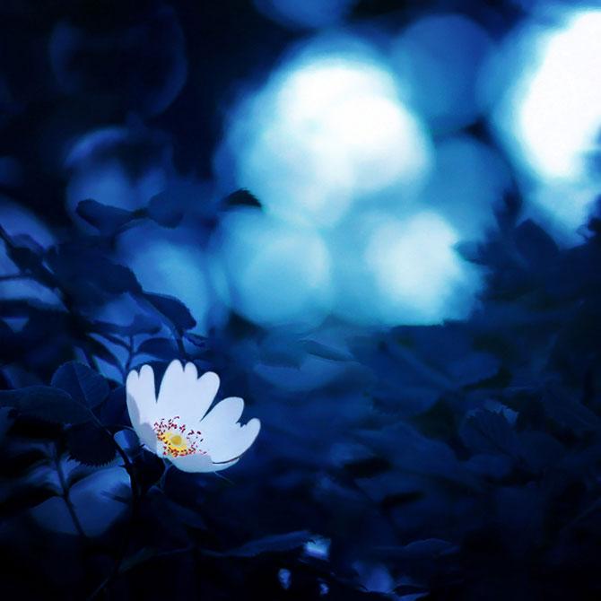 20 de fotografii cu frumusetile fiecarui anotimp - Poza 3